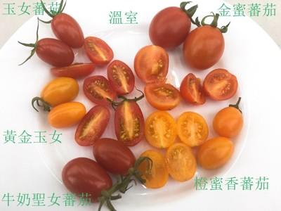 溫室LV等級橙蜜香小番茄 (4.3折)