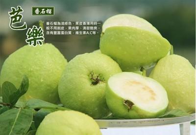 頂級套網燕巢牛奶珍珠芭樂 (4.6折)