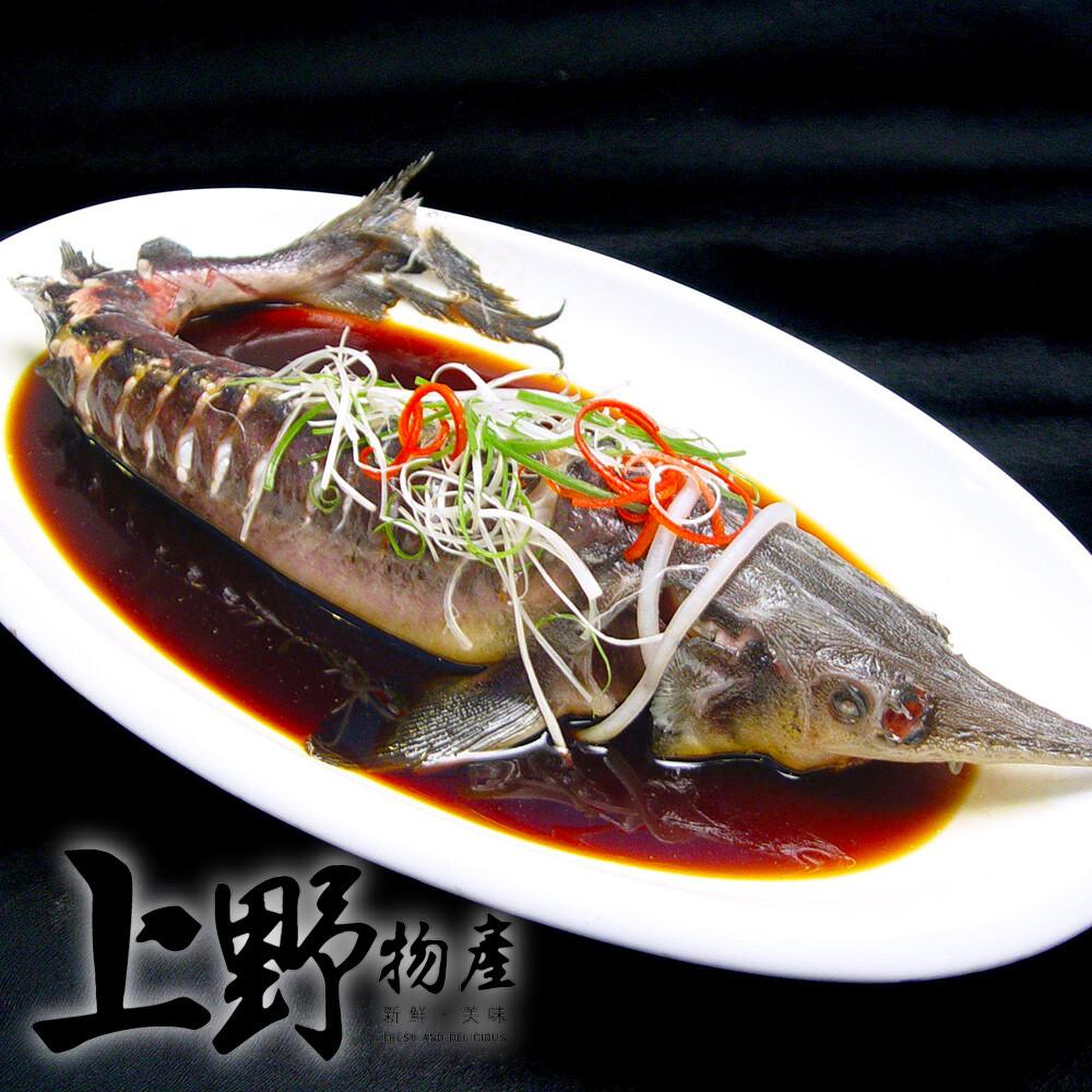 上野物產南投名間溫養鱘龍魚全魚(600g10%/隻)