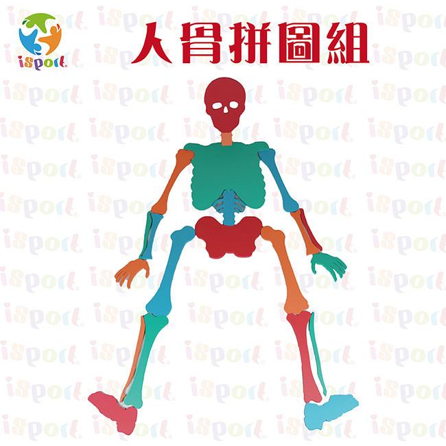 台灣isport人骨拼圖組