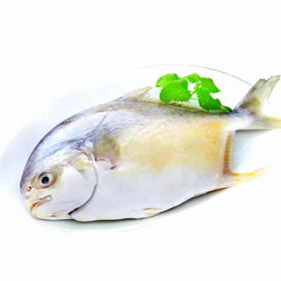 【一等鮮】澎湖生凍整尾金鯧魚(700g/尾〉 (4.7折)