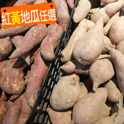 台農57號.66號【紅黃地瓜任選】(番薯) (5.6折)