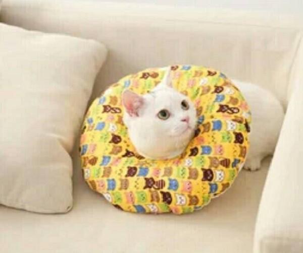 防舔咬項圈-防水可拆洗設計(黃色貓咪尺寸: m號