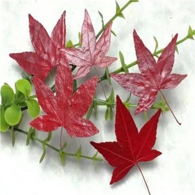 楓葉標本 滴膠乾花DIY手工花材押花材料乾花標本植物教學標本,一份5片裝(10入) (8.3折)