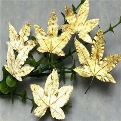 楓葉標本 滴膠乾花DIY手工花材押花材料乾花標本植物教學標本,一份12片(5入) (8.4折)