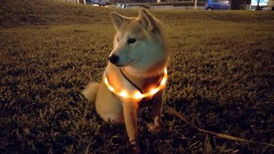 寵物LED發光項圈 USB充電 可自行剪短 (4.2折)