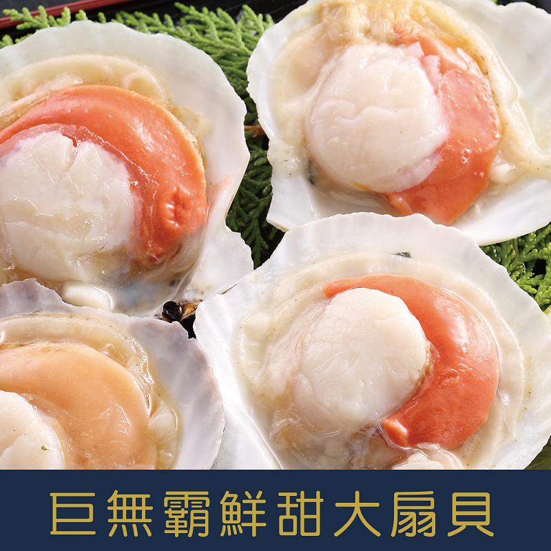 日本野生巨無霸大扇貝11-12cm*10顆/包