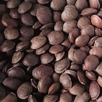 印加果種子(一公斤) (6.3折)