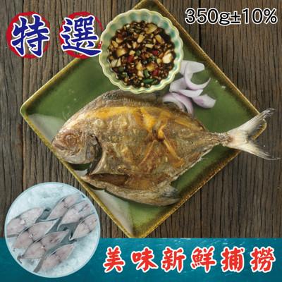 【i TYPE】 特選印尼野生文鯧魚350g 年菜首選野生鯧魚 年年有餘 (4.3折)