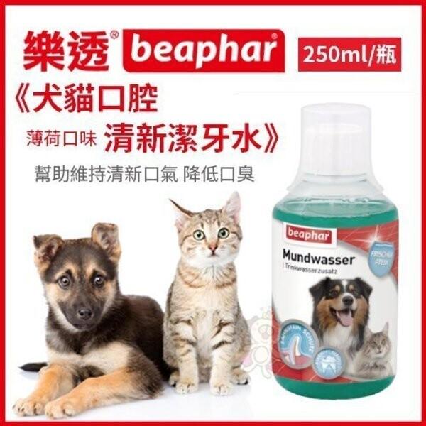 荷蘭beaphar 樂透犬貓口腔清新潔牙水250ml/瓶 薄荷口味 幫助維持清新口氣 降低口臭