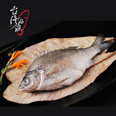 【台灣好漁】貴妃魚(澳洲銀鱸國寶魚) (9折)