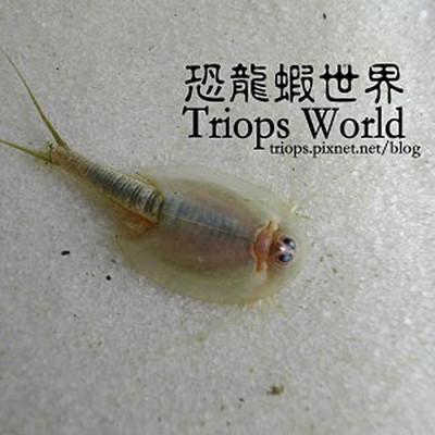 賽先生科學工廠│恐龍蝦培養組 (三款) (6.7折)