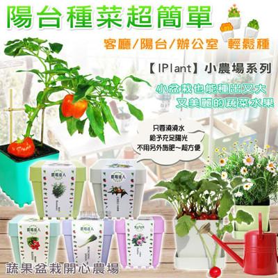 *療癒商品*iPlant開心積木小農場 輕鬆種盆栽系列 (6折)