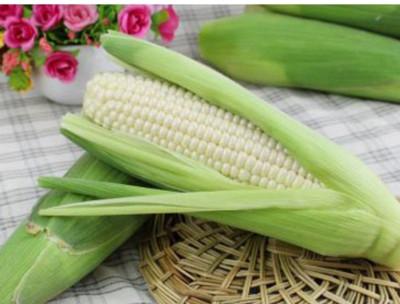 新鮮直送白龍王水果玉米(每斤約2~3隻)/入 (5.6折)