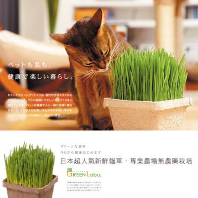 【買達人】GREEN Labo DIY新鮮寵物食用貓草(燕麥草) (5折)