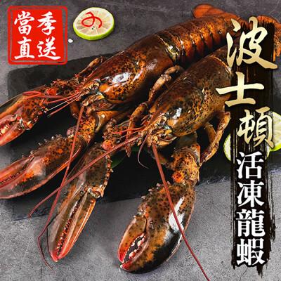 【海鮮王】獨家進口當季活凍波士頓大龍蝦(500g±10%/隻)SS044-01 (7.1折)