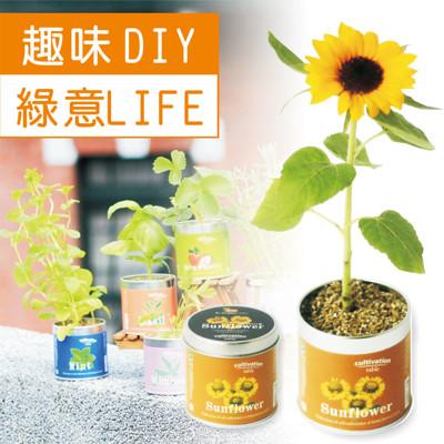 【迎光】迷你花園桌上栽培罐