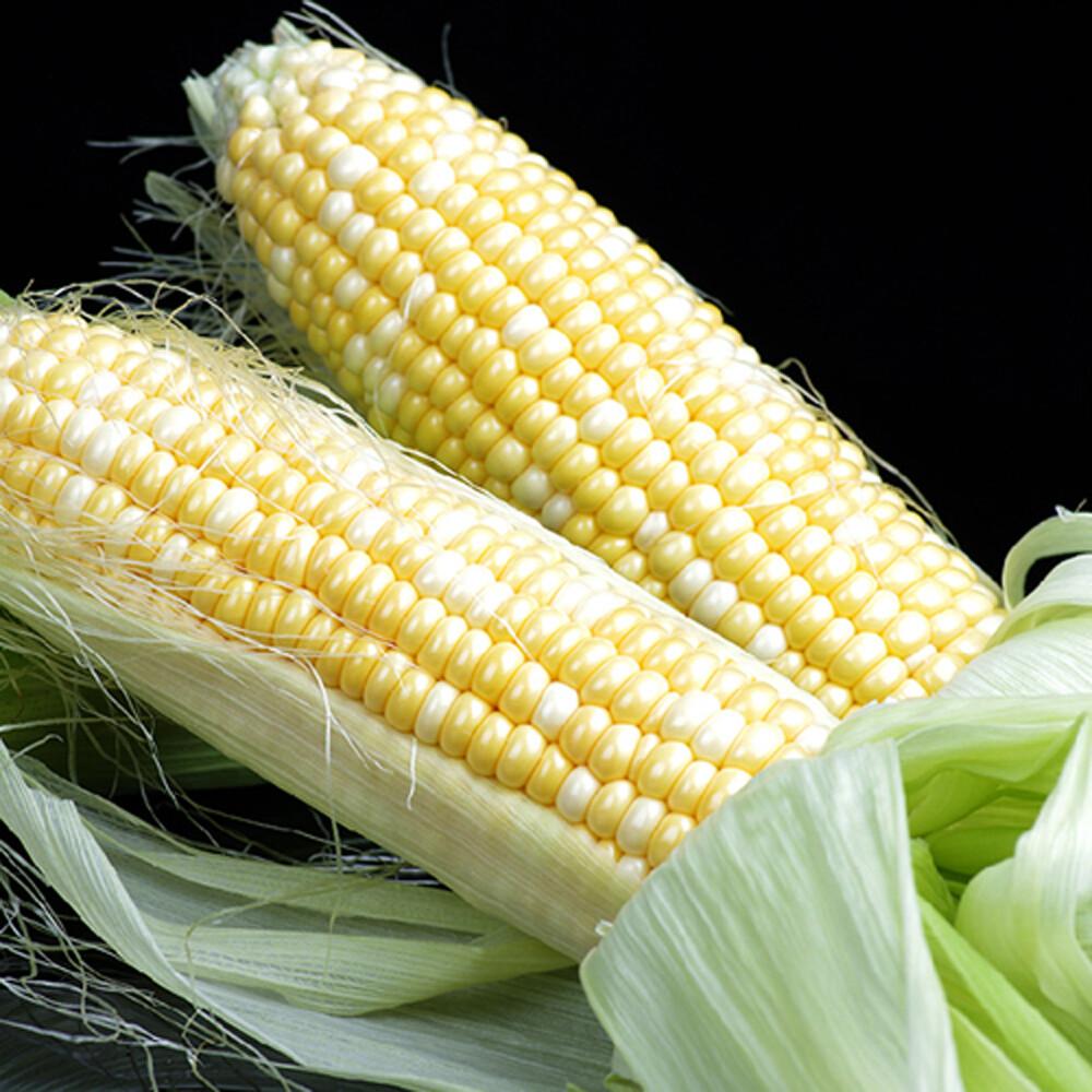 鮮採家香q糯米玉米6台斤1箱(約12-18支)
