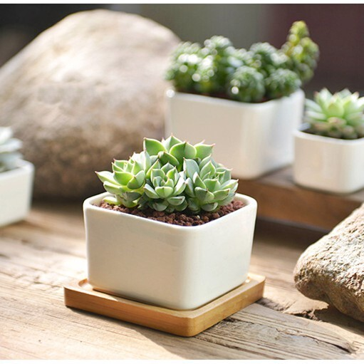 白色正方陶瓷多肉花盆盆栽 - 大號+竹托盤