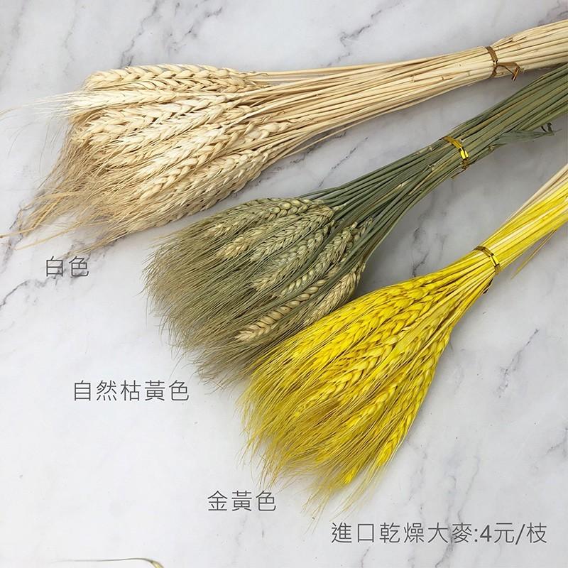 進口乾燥天然大麥進口花材線條感-乾燥花圈 乾燥花束 不凋花 拍照道具 室內擺飾 乾燥花材 裝飾插花鄉